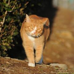 フォロー大歓迎/にゃんこ同好会/猫との暮らし/ねこのきもち/寒い/散歩 寒いけど良い天気になったニャー😸☀️(3枚目)