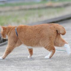 にゃんこ同好会/ねこのきもち/猫のいる暮らし/曇り/散歩/おでかけ/... 空は曇っているニャー🙀 早く晴れにならな…(4枚目)