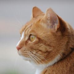 フォロー大歓迎/にゃんこ同好会/猫との暮らし/ねこのきもち/散歩/曇り空 また曇り空になっちゃったニャー😿 でも散…(9枚目)