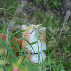 花/フォロー大歓迎/ねこ/にゃんこ同好会/ねこのきもち/散歩 草花も咲いていい季節になったニャー🌱😻🌻…