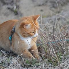 フォロー大歓迎/にゃんこ同好会/猫との暮らし/ねこのきもち/ポカポカ/散歩 今日はポカポカ陽気で散歩もウキウキだニャ…(8枚目)