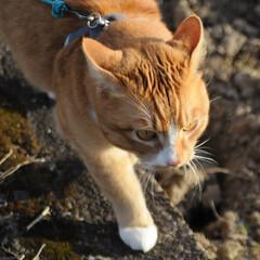 フォロー大歓迎/にゃんこ同好会/猫との暮らし/ねこのきもち/ねこにすと/風/... 今日は風が冷たかったニャー😽➿➿➿😱(9枚目)