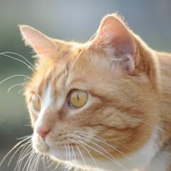 フォロー大歓迎/にゃんこ同好会/猫との暮らし/ねこにすと/ねこのきもち/春/... 🌻季節は進んでいるニャー😸(10枚目)
