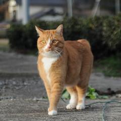 にゃんこ同好会/猫のいる暮らし/ねこのきもち/晴れ/散歩/おでかけ/... わーい😸日が射してきたニャー😸🌤️ 明日…(3枚目)