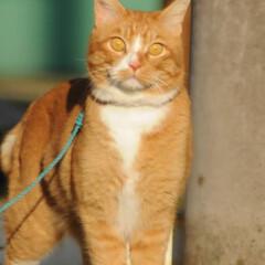 フォロー大歓迎/にゃんこ同好会/猫との暮らし/ねこのきもち/散歩/おでかけ 日向ぼっこは暖かくて気持ちいいニャー😻😻😻(7枚目)