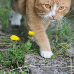 フォロー大歓迎/にゃんこ同好会/猫との暮らし/ねこにすと/ねこのきもち/春/... 🌻季節は進んでいるニャー😸