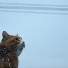 ねこのきもち/雨/ねこ/トラ/写真/LIMIAペット同好会/... 雨の合間に散歩だニャー😸😻😸