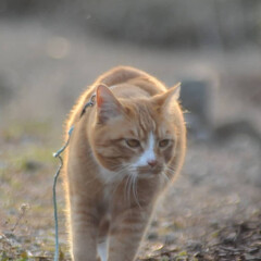 フォロー大歓迎/にゃんこ同好会/猫との暮らし/ねこのきもち/散歩/おでかけ 🙀にゃんだ⁉️ 不審物発見‼️🙀(4枚目)