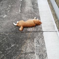 散歩/猫のいる暮らし/ねこのきもち/フォロー大歓迎 台風🌀過ぎて彼岸花も安心かにゃ😽(5枚目)