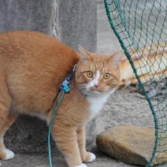 ねこのきもち/猫のいる暮らし/にゃんこ同好会/散歩/おでかけ/フォロー大歓迎 😸今日は体が軽いニャー🐾🐾🐾😻 スリスリ…(6枚目)