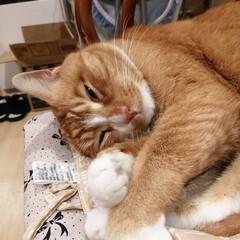 フォロー大歓迎/にゃんこ同好会/猫との暮らし/ねこのきもち 今日は雨なので部屋でマッタリ😽