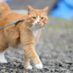フォロー大歓迎/にゃんこ同好会/猫との暮らし/ねこのきもち/ねこにすと/雨/... 散歩行こうとしたら雨が降ってきたニャー😿…(3枚目)