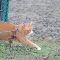 にゃんこ同好会/ねこのきもち/猫のいる暮らし/散歩/おでかけ/フォロー大歓迎 そろりそろり😽 鳥さん遊ぼう➿➿😻(1枚目)