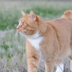 にゃんこ同好会/猫のいる暮らし/ねこのきもち/雨上がり/散歩/おでかけ/... 雨上がりは草が美味しいニャー😻🌱 また雨…(4枚目)