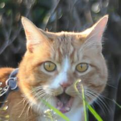 フォロー大歓迎/にゃんこ同好会/猫との暮らし/ねこのきもち/散歩 今日は風が冷たいけど広い草むらで思い切り…(8枚目)