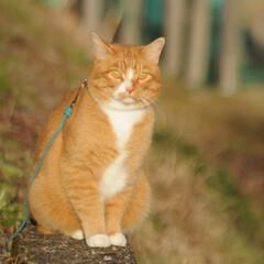 フォロー大歓迎/にゃんこ同好会/猫との暮らし/ねこのきもち/寒い/散歩 寒いけど良い天気になったニャー😸☀️(5枚目)