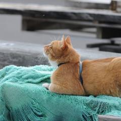 フォロー大歓迎/にゃんこ同好会/ねこのきもち/ねこ/梅雨/散歩/... 晴れてきたと思ったら😸☀️ また曇ってき…