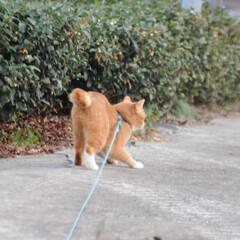 にゃんこ同好会/ねこのきもち/カラス/散歩/おでかけ/フォロー大歓迎 今日も楽しい散歩だったニャー😸 カラスさ…(8枚目)