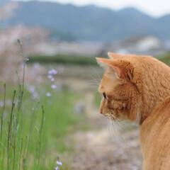 フォロー大歓迎/猫との暮らし/にゃんこ同好会/ねこにすと/ねこのきもち/花/... 桜が終わって草花が伸びてきたニャー😸🌱 …