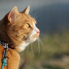 フォロー大歓迎/にゃんこ同好会/猫との暮らし/ねこのきもち/ポカポカ/散歩 今日はポカポカ陽気で散歩もウキウキだニャ…