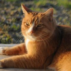 フォロー大歓迎/にゃんこ同好会/猫との暮らし/ねこにすと/ねこのきもち/風/... 今日は暖かい春の風、春の匂いがしてるニャ…
