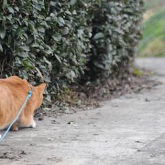 フォロー大歓迎/にゃんこ同好会/猫との暮らし/ねこのきもち/散歩/おでかけ 今日も気合い入れて出動😸🐾🐾🐾🐾🐾(5枚目)