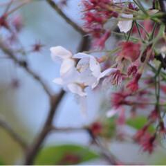 トラ/さんぽ/茶トラ/ねこのきもち/春のフォト投稿キャンペーン/フォロー大歓迎/... 春を感じるニャー🌱😸🌱(4枚目)