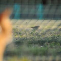 フォロー大歓迎/にゃんこ同好会/猫との暮らし/ねこのきもち/すずめ/鳥/... すずめ🐦さん➿😽 待って~😽🐾🐾🐾➿(4枚目)