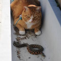 フォロー大歓迎/にゃんこ同好会/ねこのきもち/散歩/ねこ 今日は天気も良いしヘビさんにも会えたしテ…(1枚目)