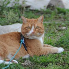 フォロー大歓迎/にゃんこ同好会/猫との暮らし/ねこのきもち/散歩 朝から雨降ってたけど止んでよかったニャー…(9枚目)