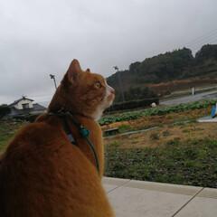 フォロー大歓迎/にゃんこ同好会/猫との暮らし/ねこのきもち/雨 連日の雨なので散歩はお預けだニャー😿