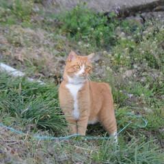 フォロー大歓迎/にゃんこ同好会/ねこのきもち/ねこ/散歩/猫の日 今日は猫の日なのかにゃ🐱 ポカポカ陽気で…(6枚目)