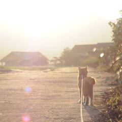 にゃんこ同好会/ねこのきもち/夕焼け/散歩/おでかけ/フォロー大歓迎 風が強くなってきた🙀🌀 台風➰🌀気を付け…