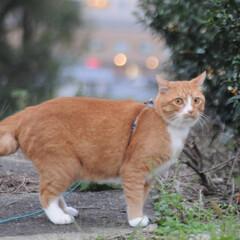 にゃんこ同好会/ねこのきもち/散歩 食べきれないニャー🙀😻😸(8枚目)