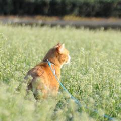 フォロー大歓迎/にゃんこ同好会/猫との暮らし/ねこのきもち/散歩 今日は風が冷たいけど広い草むらで思い切り…(3枚目)