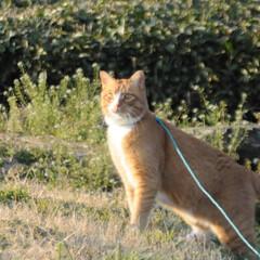 フォロー大歓迎/にゃんこ同好会/猫との暮らし/ねこのきもち/散歩 今日は風が冷たいけど広い草むらで思い切り…(6枚目)