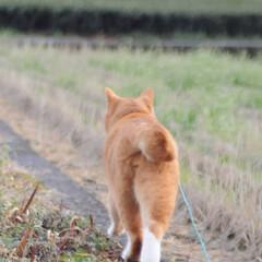 にゃんこ同好会/猫のいる暮らし/ねこのきもち/晴れ/散歩/おでかけ/... わーい😸日が射してきたニャー😸🌤️ 明日…(9枚目)