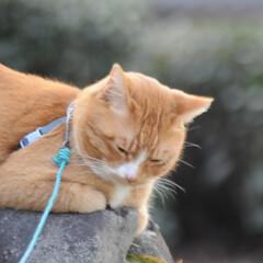 にゃんこ同好会/フォロー大歓迎/猫との暮らし/ねこのきもち/ねこにすと/眠い/... 暖かくて眠たくなったニャー😽