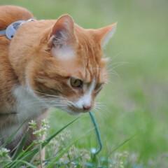 フォロー大歓迎/にゃんこ同好会/猫との暮らし/ねこのきもち/ねこにすと/散歩 気になる杭だニャー😻😻😻 いっぱいスリス…(8枚目)