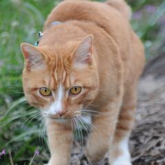 フォロー大歓迎/にゃんこ同好会/猫との暮らし/ねこのきもち/散歩/おでかけ 今日も気合い入れて出動😸🐾🐾🐾🐾🐾