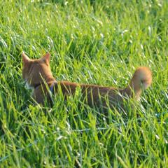 フォロー大歓迎/にゃんこ同好会/猫との暮らし/ねこのきもち/散歩 今日は風が冷たいけど広い草むらで思い切り…(4枚目)