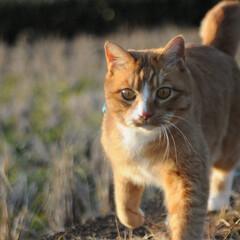 にゃんこ同好会/猫との暮らし/ねこのきもち/散歩/おでかけ 今日も元気に出動!🐱🐾🐾🐾