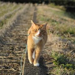 フォロー大歓迎/にゃんこ同好会/猫との暮らし/ねこのきもち/ポカポカ/散歩 今日はポカポカ陽気で散歩もウキウキだニャ…(2枚目)