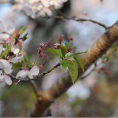 ねこのきもち/茶トラ/さんぽ/ねこ/LIMIAペット同好会/フォロー大歓迎/... 爽やかな季節になりましたニャー😻👍(5枚目)