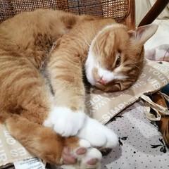 フォロー大歓迎/にゃんこ同好会/猫との暮らし/ねこのきもち/散歩 朝から雨降ってたけど止んでよかったニャー…(10枚目)