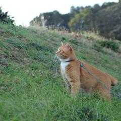 フォロー大歓迎/にゃんこ同好会/猫との暮らし/ねこのきもち/散歩 朝から雨降ってたけど止んでよかったニャー…