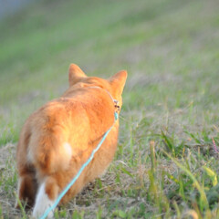 にゃんこ同好会/ねこのきもち/鳥/散歩/おでかけ/フォロー大歓迎 抜き足差し足🐾🐾😸 カササギさんに嫌われ…