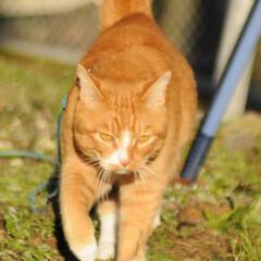 フォロー大歓迎/にゃんこ同好会/猫との暮らし/ねこのきもち/寒い/散歩 寒いけど良い天気になったニャー😸☀️(4枚目)