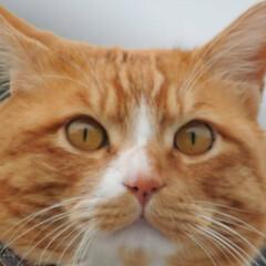 フォロー大歓迎/にゃんこ同好会/猫との暮らし/ねこのきもち/散歩/曇り空 また曇り空になっちゃったニャー😿 でも散…(10枚目)