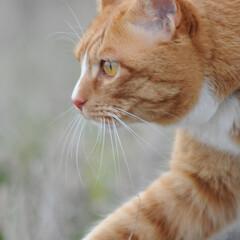 フォロー大歓迎/にゃんこ同好会/猫との暮らし/ねこのきもち/散歩/おでかけ 今日も気合い入れて出動😸🐾🐾🐾🐾🐾(3枚目)